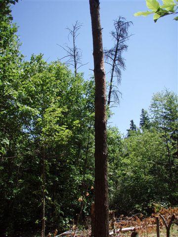 Trees to take down