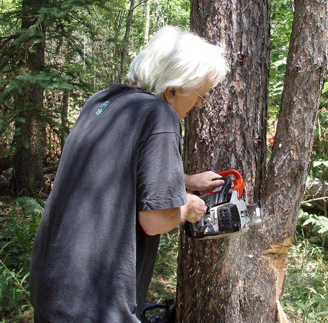 Robin Chain Saw work