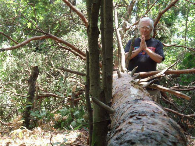 Robin's prayer for the pine tree