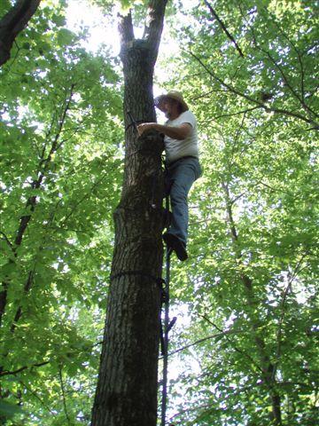 Bill up a tree