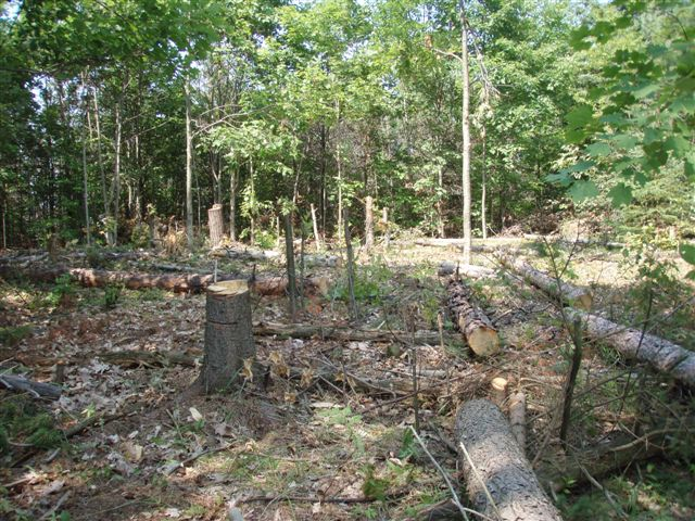 Circle with stumps and logs