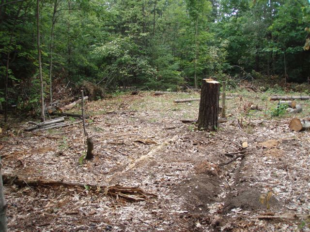 Stump to be removed