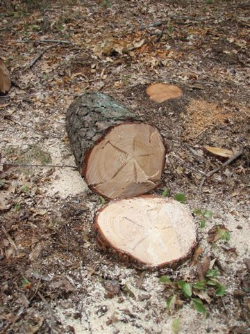 Stump pentagram