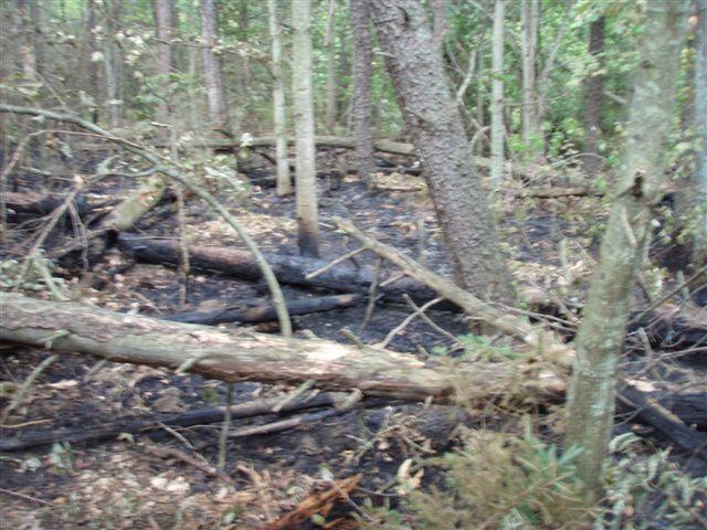 Lightning fire on property 5