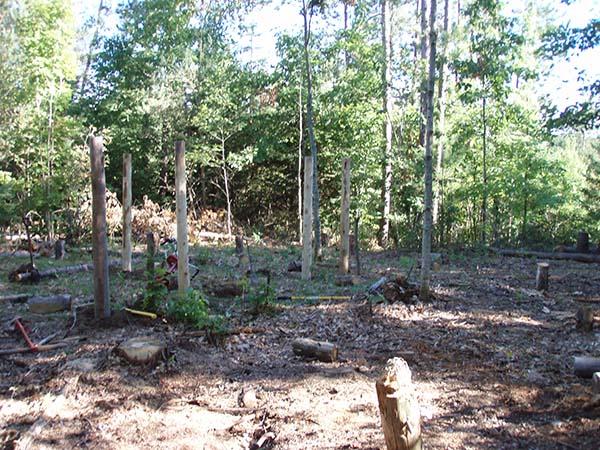 First Six Posts Includes Oak Tree!
