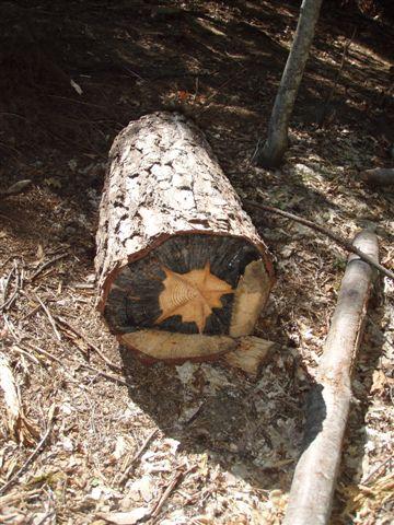 The Star Stump!
