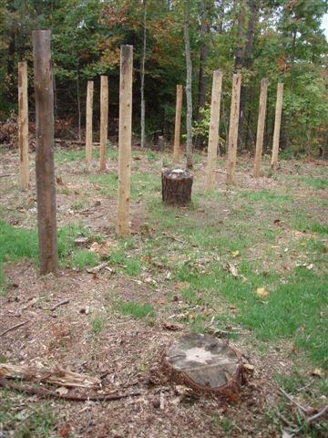 Forest Woodhenge - Star Stump in Centre / Star Tree Stump In Front