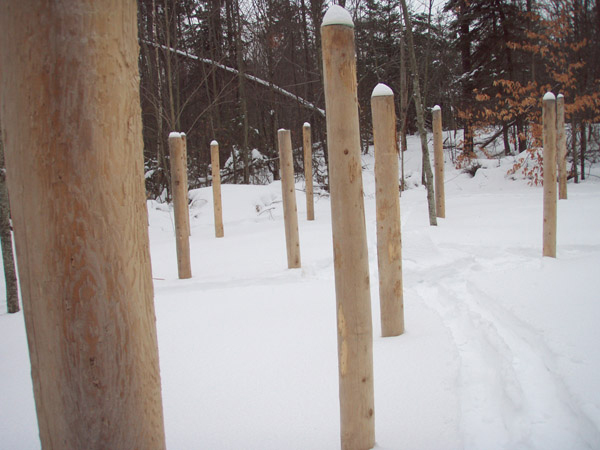 Forest Woodhenge -  a Winter Solstice morning