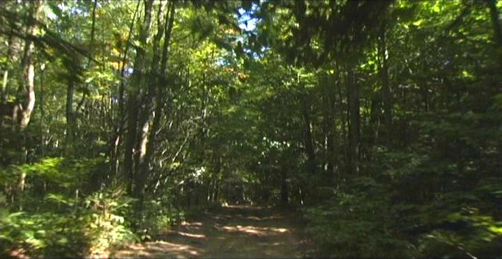 Woodhenge Ceremony - The Way In