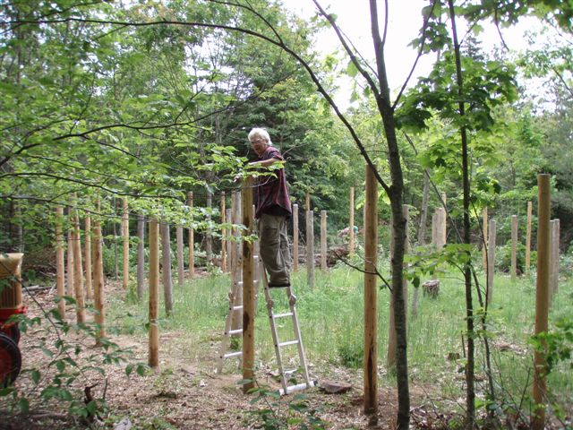 Forest Woodhenge - Robin putting CDs on top of the posts