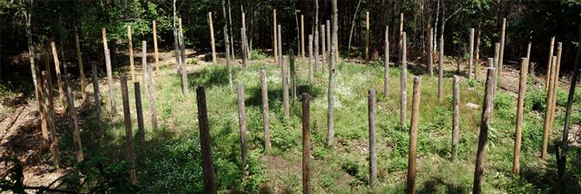 Forest Woodhenge - 5 circles!