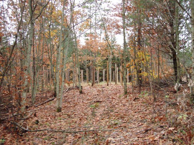 Forest Woodhenge - Scorpio - Approach