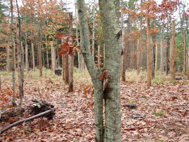 Forest Woodhenge - Scorpio - Approach (3)