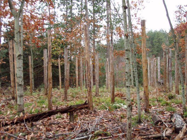 Forest Woodhenge - Scorpio - Eastern Rim