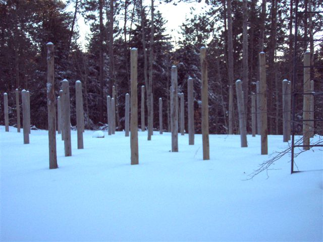 Forest Woodhenge - Winter Solstice