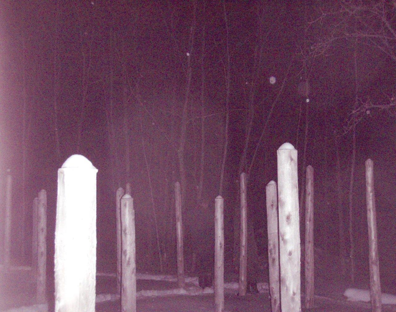 Forest Woodhenge - Solstice Meditation (4)