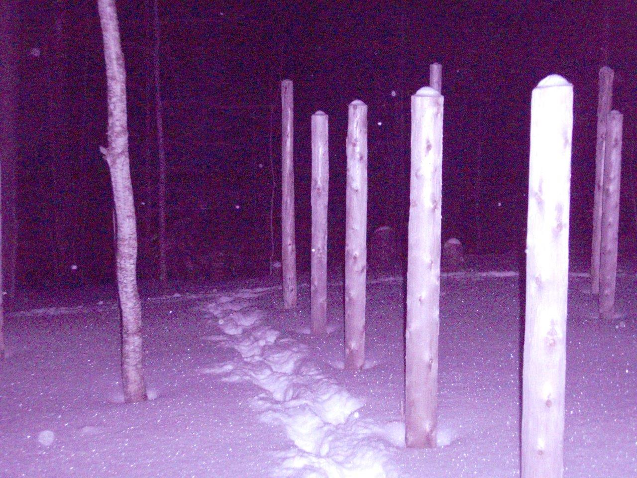 Forest Woodhenge - Solstice Meditation