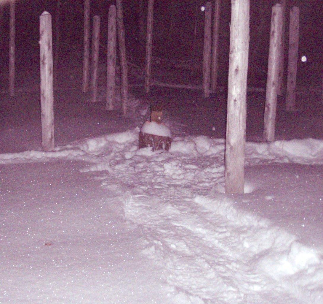 Forest Woodhenge - Solstice Meditation (3)