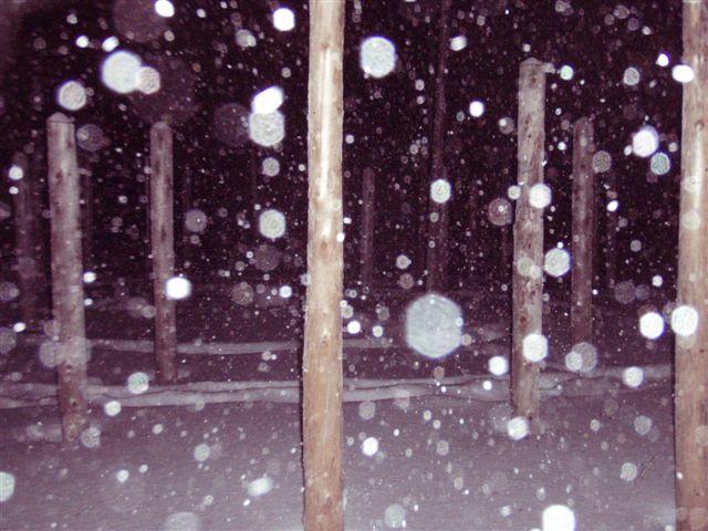 Forest Woodhenge - Winter Solstice - Midnight Meditation