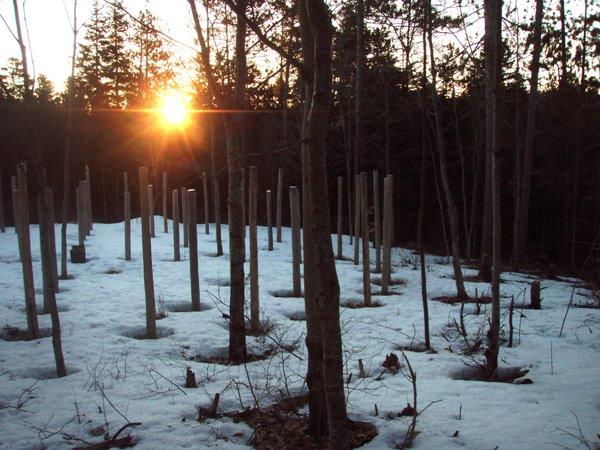 Forest Woodhenge - Spring Equinox - Sunrise
