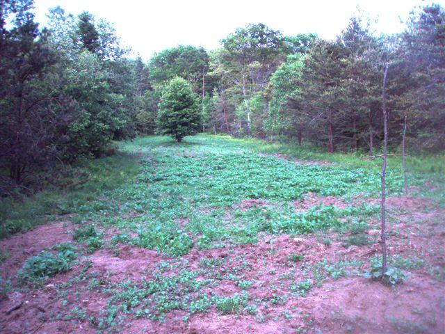 Woodhenge Garden (1)