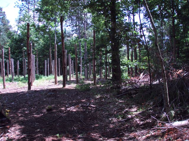 Forest Woodhenge Western Half