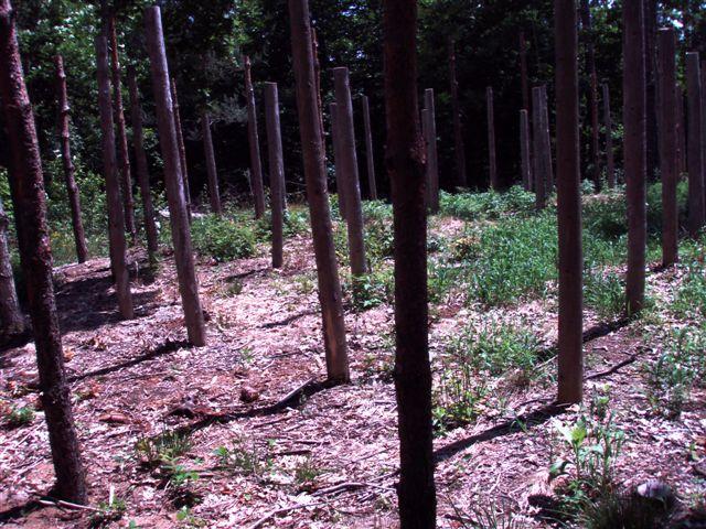Forest Woodhenge Eastern half