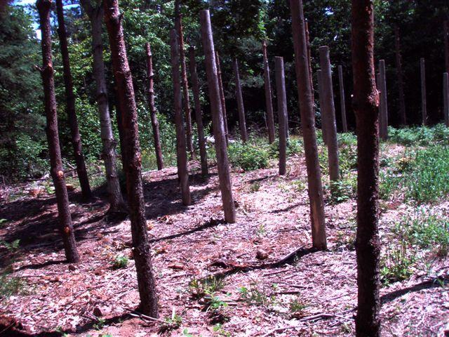 Forest Woodhenge Eastern rim
