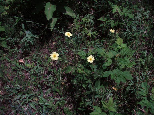Forest Woodhenge flowers