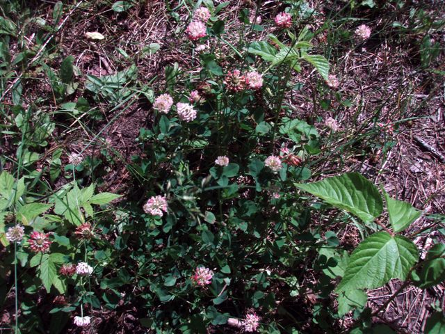Forest Woodhenge flowers (2)