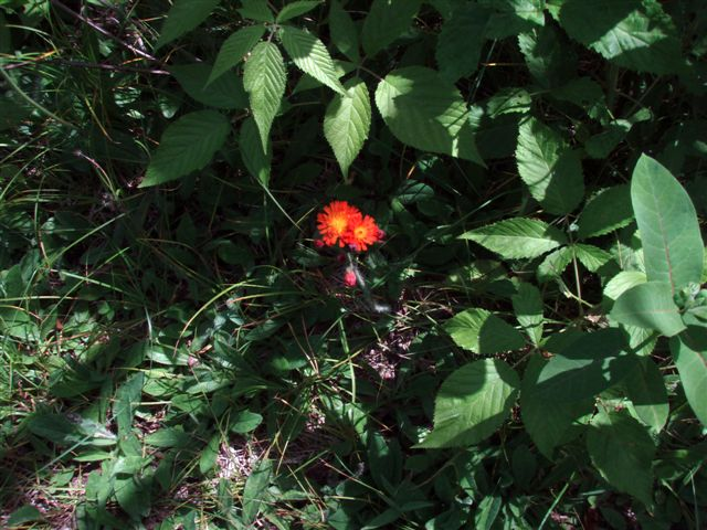 Forest Woodhenge flowers (3)
