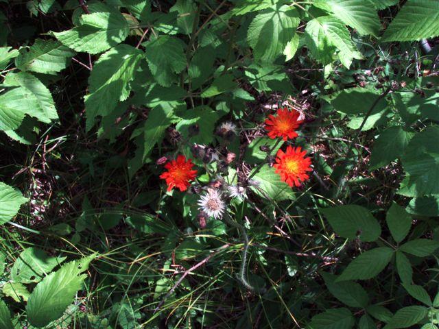 Forest Woodhenge flowers (4)