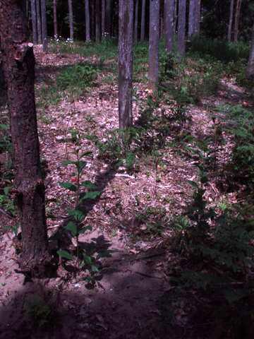 Forest Woodhenge - True Noon (5)