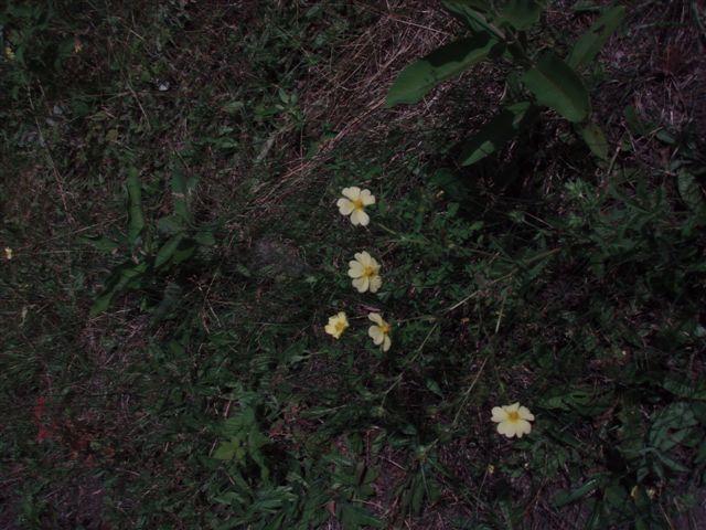 Forest Woodhenge - Flowers