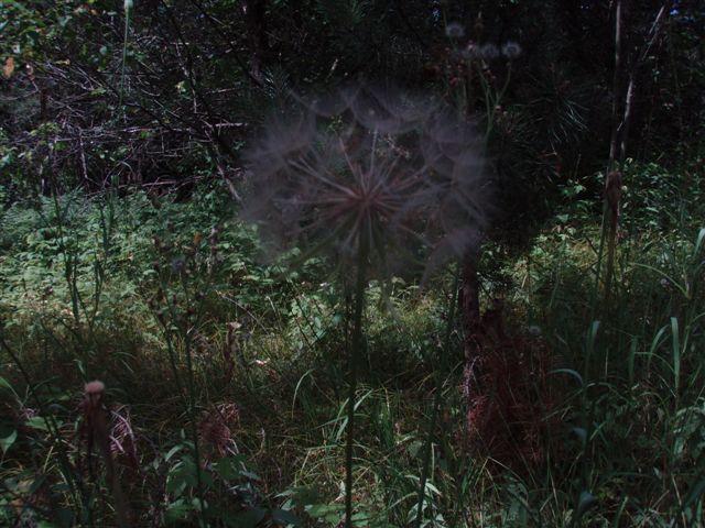 Forest Woodhenge - Flowers (3)