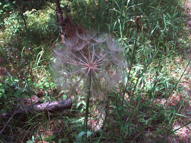 Forest Woodhenge - Flowers (7)