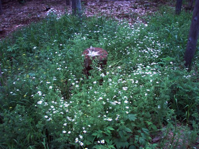 Star Stump with Flowers