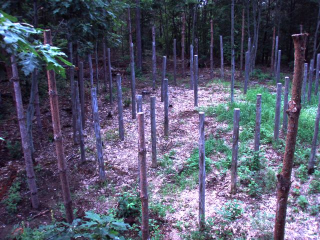 Forest Woodhenge - West Side