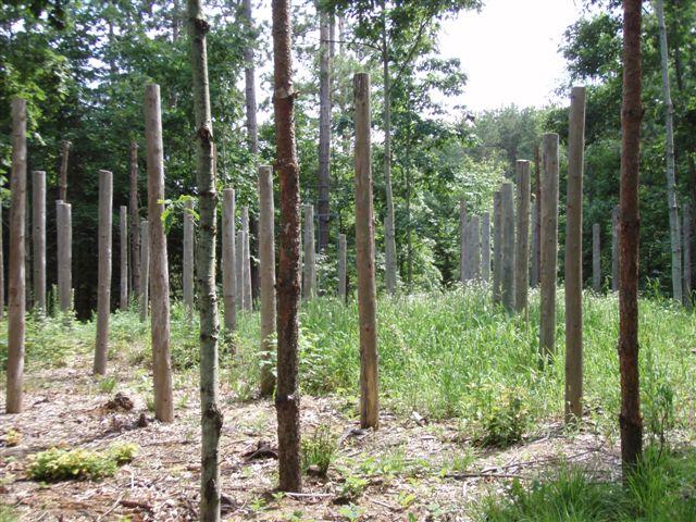 Forest Woodhenge - Midsummer South