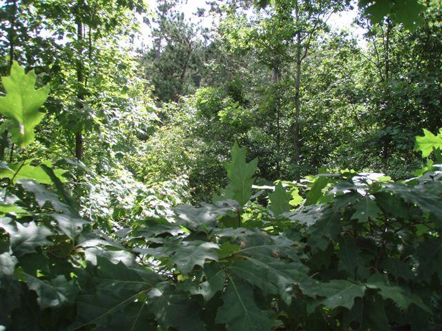 Forest Woodhenge - Midsummer (5)