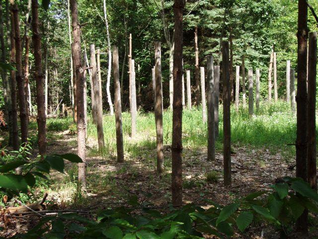 Forest Woodhenge - Midsummer (7)