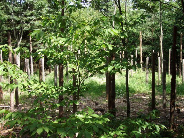 Forest Woodhenge - Midsummer (9)