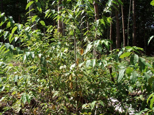 Forest Woodhenge - Midsummer (12)