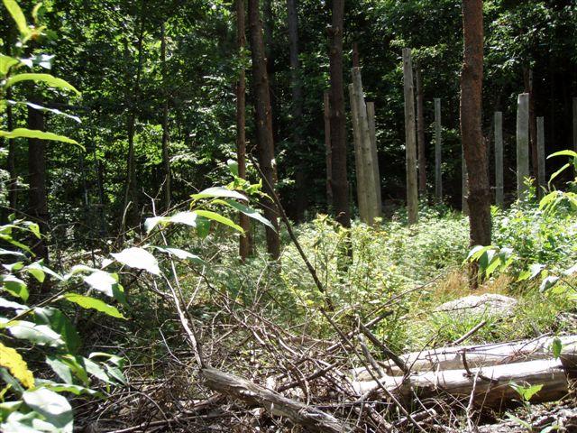 Forest Woodhenge - Midsummer (14)