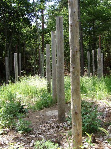 Forest Woodhenge - Midsummer (15)