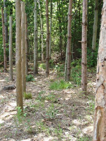 Forest Woodhenge - Midsummer (16)