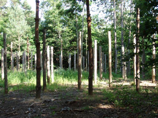Forest Woodhenge - Midsummer (17)