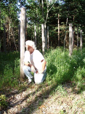 Midsummer - Robin in the Woodhenge