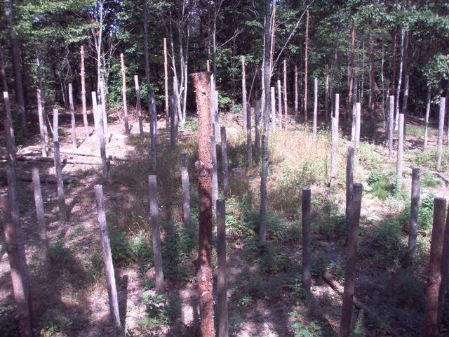Forest Woodhenge Postholes (3)