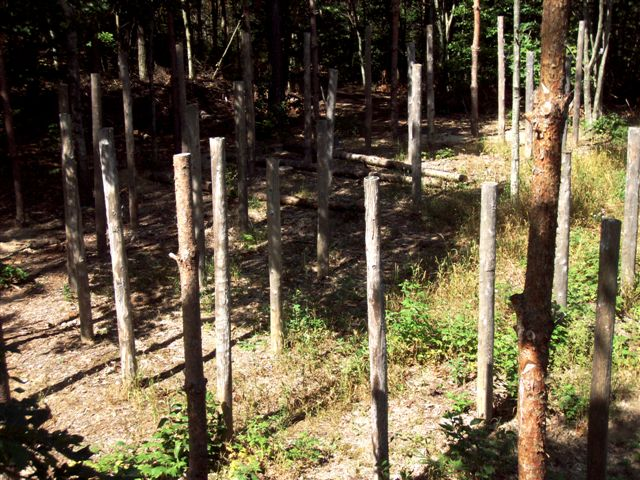 Forest Woodhenge: 3 Minutes After True Noon (2)